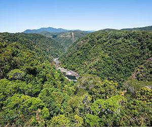 Ci saranno dei percorsi guidati all'interno della foresta pluviale dove scoprire una natura ancora incontaminata