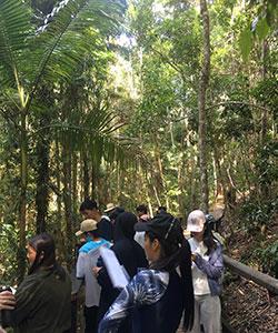 Scoprirete con le vostre guide la flora e la fauna della rainforest attraverso sentieri immersi nel silenzio