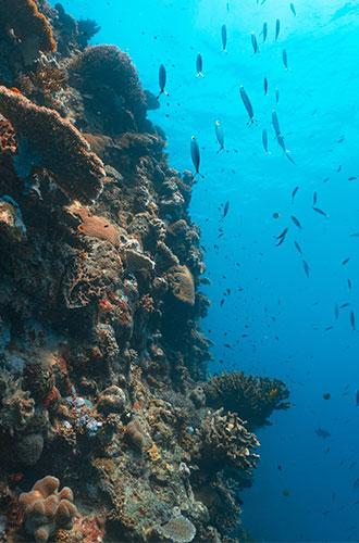 In questo viaggio farai esperienza della vita sulla costa del Queensland e scoprirai molte delle splendide spiagge
