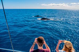 L'esperienza nel Queensland prevede anche delle escursioni indimenticabili, parte del programma scolastico